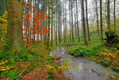 Autumn forest with creek in the mist. Belgium. Ardennes. Vresse — Stock Photo