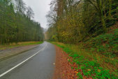 Autumn forest with road. Belgium. Ardennes. Vresse sur Semois. — Stock Photo