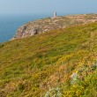 Cliffs with flowers and old tower at the Cape of Frehel. Brittan — Stock Photo #51186395