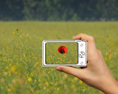 Photography single poppy in the field — Stock Photo