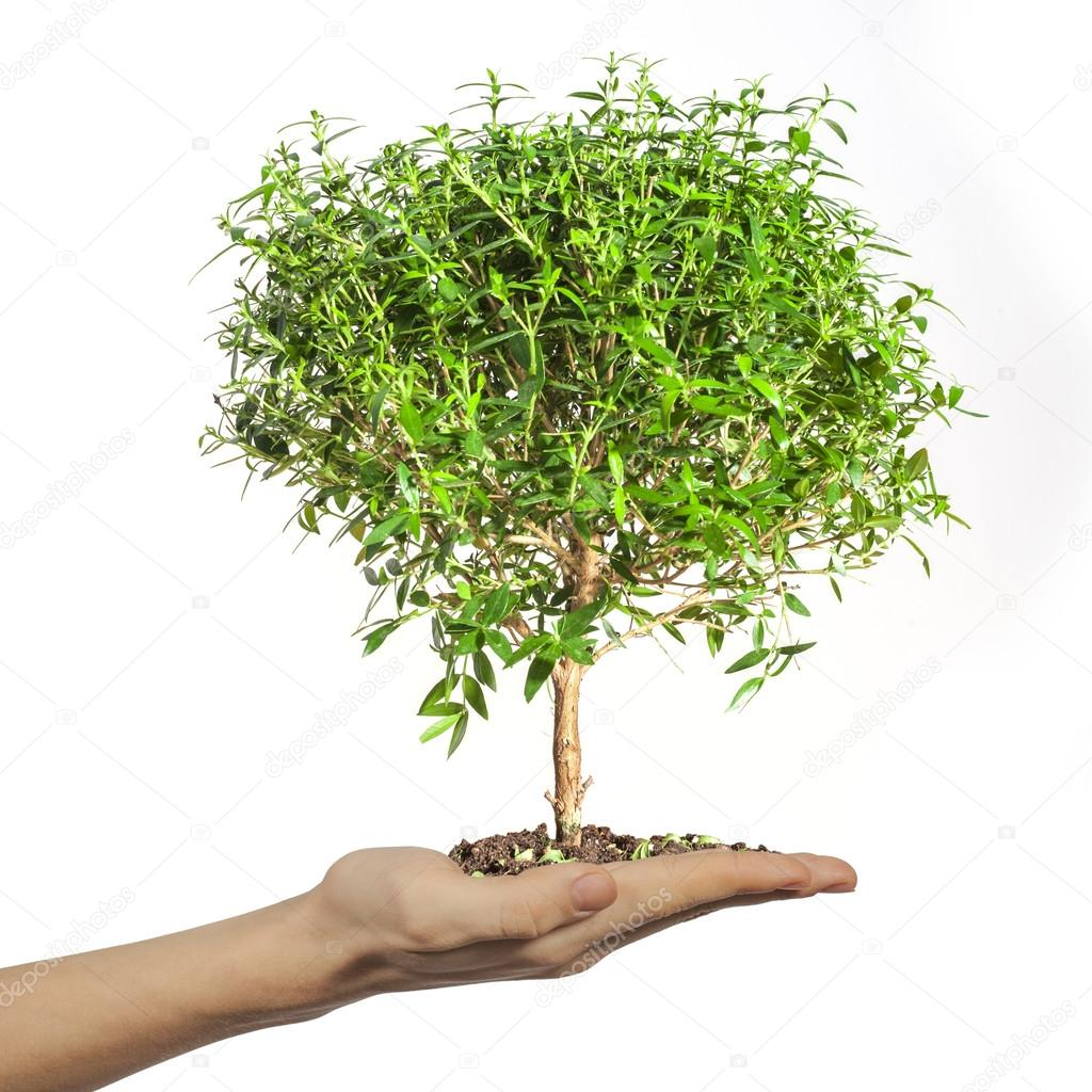 Small tree in the hands — Stock Photo #18905489