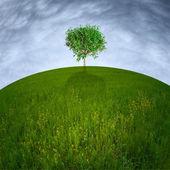 Single tree on hill — Stock Photo