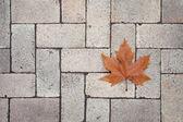 Autumn in city park — Stock Photo