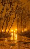 Soir brumeux dans le parc — Photo