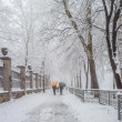 Stock Photo: Winter city park in morning