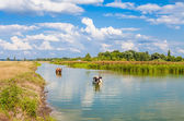 Cows in the river in summer — Stock Photo