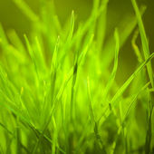 Spring or summer background with grass — Stock Photo