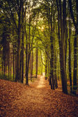 Beautiful spring forest — Stock Photo