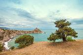 Tree and sea — Zdjęcie stockowe