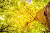 Grüne zweige in einem holz und strahlen der sonne — Stockfoto