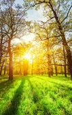 лучи солнца утром в парке весной — Стоковое фото