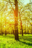 Morning sun beams in the spring park — Stock Photo