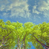 Green branches in a wood and blue sky — Stock Photo