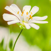 Spring background with flower and beautiful bokeh — Stock Photo