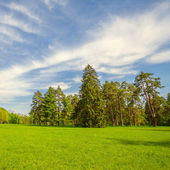 Green lawn with trees in park — Stock Photo