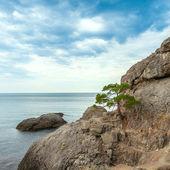 Berg zee landschap. — Stockfoto