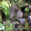 Fresh water stream in mountain forest — Stock Video