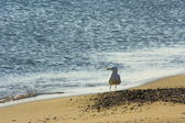 Seagull on the sand — Stock Photo