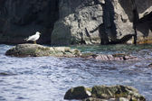Seagull on the rocks — Stock Photo