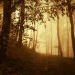 Warm light in forest on a summer day — Stock Photo