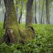 Misty forest with green grass on the ground - Stock Photo