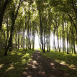 Sun spots in a green forest in summer - Stock Photo