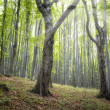 Magical green forest — Stock Photo #12184144