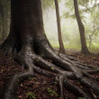 Roots of a tree in a misty forest — Stock Photo #12184147
