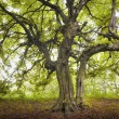 Old tree in a green forest - Stock Photo