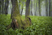 Misty forest with green grass on the ground — 图库照片
