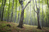 Magical green forest — Stock Photo