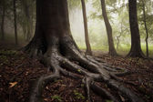 Roots of a tree in a misty forest — Stock Photo