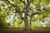 Old tree in a green forest — Stock Photo