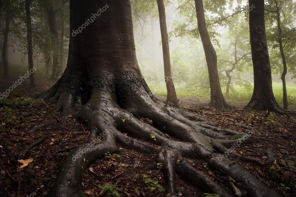 Фотообои Roots of a tree in a misty forest