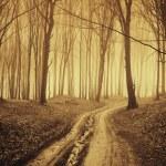weg door een bos met zwarte bomen en mist in de late herfst — Stockfoto
