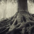 Roots of an old tree in a dark misty forest — Stock Photo #12426926