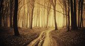 Droga przez las z czarnego drzewa i mgła w późnej jesieni — Zdjęcie stockowe
