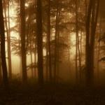 zonsopgang op de rand van een bos in het najaar van — Stockfoto