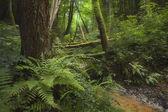 Groene bos met rivier en dichte vegetatie — Stockfoto