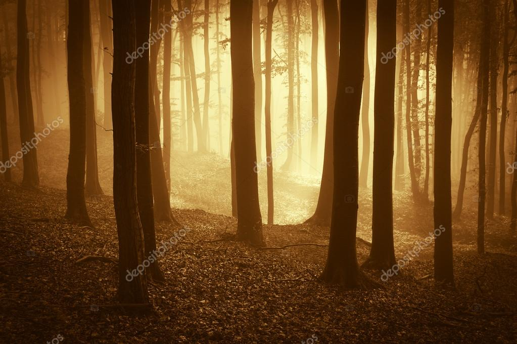 Forest at sunset with fog and mysterious atmosphere — Lizenzfreies Foto #12745787