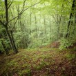 Green forest in summer — Photo