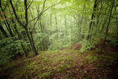 Zielony las, latem — Zdjęcie stockowe