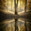 Autumn in a forest with trees reflecting in lake — Stok fotoğraf