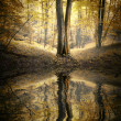 Autumn in a forest with trees reflecting in lake — Stock Photo