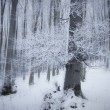 Frosted forest and tree in winter — Stockfoto