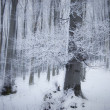 Frosted forest and tree in winter - Stock Photo