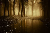 Lake in a forest with fog in autumn — Stock Photo