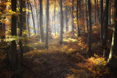 Beautiful autumn colors in a forest — Stock Photo