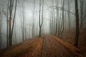 Bosque con niebla y carretera en otoño — Foto de Stock