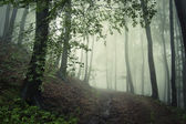 Green fog in the forest — Stock Photo